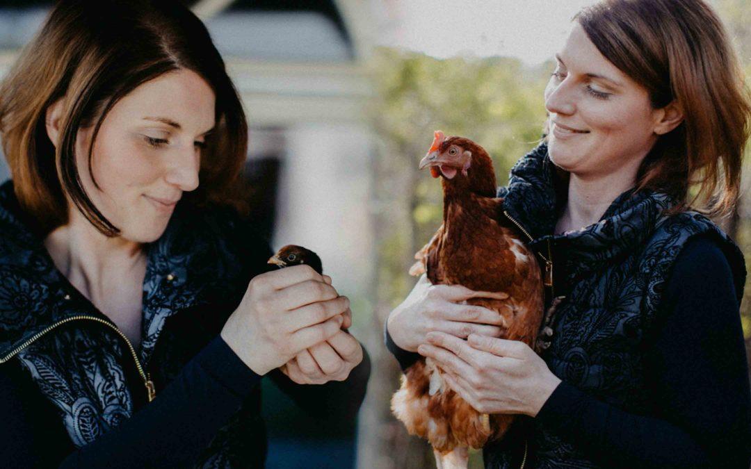 Vom Ei zum Huhn – was aus unseren Küken geworden ist