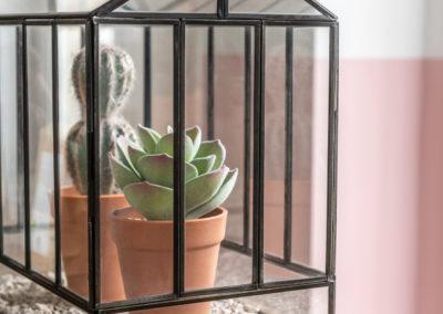 Kakteen in einem Terrarium aus Glas